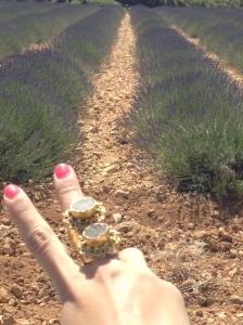 Lavender fields3